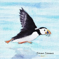 flying_puffin_256445764