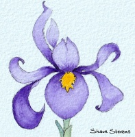 iris_for_website