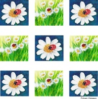 ladybirds_and_daisies