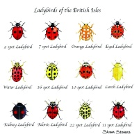 ladybirds_of_the_british_isles