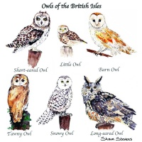owls_of_the_british_isles_v_2