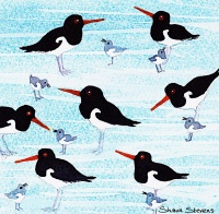 oystercatchers_website