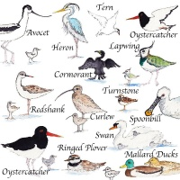 solent_birds_with_text_ii_