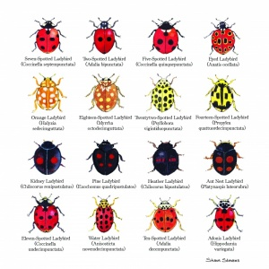 ladybird_print_with_signature_copy_1910414756